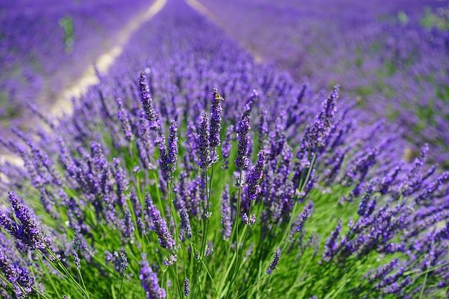 Lavendel Aroma Diffusoren